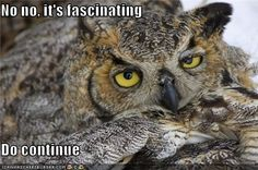 Sarcastic owl strikes again. Imagine him saying this in a British accent. It's WAY more funny. Funny Owls, Funny Animals, Cute Animals, Owl Pictures, Funny Animal Pictures, Owl Quotes, Funny Memes, Hilarious, Funny Quotes