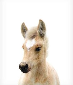 Baby horse print Foal print Farm animal prints Baby animal