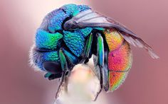 Not sure what kind of fly this is but I'd have a hard time swatting this beautiful creature.