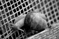 Snail and spider
