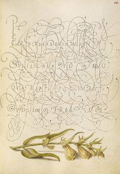 See a Dazzling, Exuberant Renaissance Calligraphy Guide - Atlas Obscura