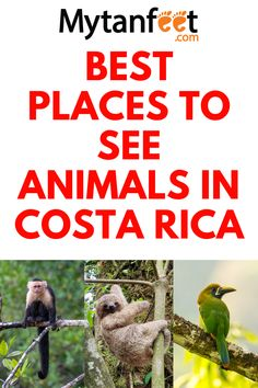 Travel Plan, Travel Advice, Travel Guides, Travel Tips, Costa Rica With Kids, Living In Costa Rica, Beautiful Places To Visit, Places To See, Road Trip Planner