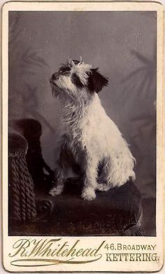 Vintage Doggy: The Terrier from Kettering