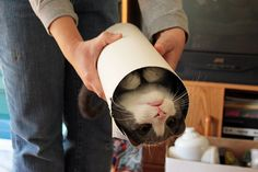 Tube of Cat, a little goes a long way.