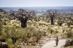 Nedbank Tour de Tuli Mountain Bike Tour, Mountain Biking, Over The Years, Wilderness, Grand Canyon, Remote, Africa, Country Roads, Tours