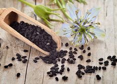 Do you know Black cumin seeds helps to lose belly fat? Get to know usage, recipes and health benefits of Nigella Sativa aka Kalonji seeds for weight loss. Nigella Sativa, Natural Medicine, Herbal Medicine, Chinese Medicine, Benefits Of Black Seed, Cumin Noir, Kalonji Seeds, Kalonji Oil, Healthy Holistic Living