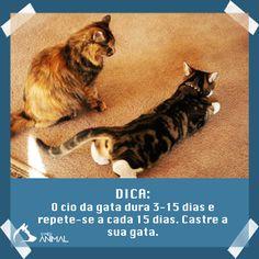 Cio na gata #animais #pets #gato #cão #veterinaria #peta #animaisfofos