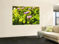 Lotus Blossom, Maldives, Indian Ocean Prints by Stuart Westmorland at AllPosters.com