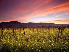 California. USA