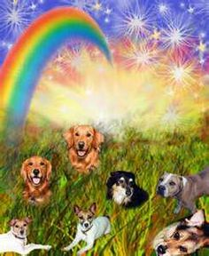 They are waiting at Rainbow Bridge...cannot wait to see all my beloved pets:)