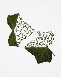 Intricately cut leaves by artist Hillary Waters Fayles Textile Sculpture, Textile Art, Dry Leaf Art, Arreglos Ikebana, Embroidered Leaves, Leaf Crafts, Paper Crafts Origami, Painted Leaves, Nature Crafts