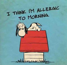 42 ideas for funny good morning quotes humor hilarious sleep Snoopy Quotes, Me Quotes, Funny Quotes, Couple Quotes, Funny Humor, Happy Quotes, Humour Quotes, Hilarious Sayings, Funny Guys
