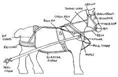 draft horse harness diagram wiring diagram electricity basics 101 u2022 rh casamagdalena us Work Horse Harness Parts Harness for Horse Drawn Wagons