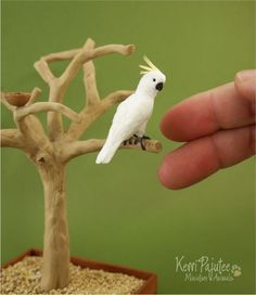 Miniature 1:12 scale Cockatoo. At this size, his bite might not be so bad. Might be a lot quieter too. #dollhouse #collectibles