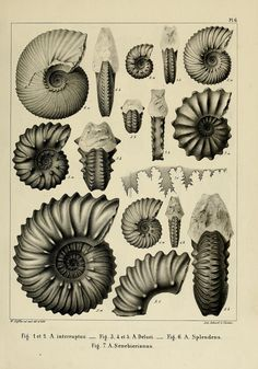n20_w1150 | by BioDivLibrary