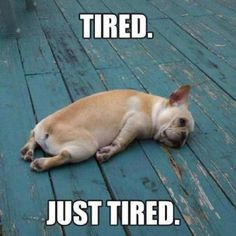 I be Tired. Just Tired. cute dog photos / fatigue