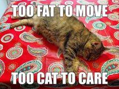 Fat Cat Jokes | Kappit
