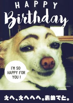 犬のシュール過ぎるお誕生日ウケる画像 Birthday Messages, Birthday Wishes, Birthday Cards, Happy Birthday, Funny Cats, Funny Animals, Cute Animals, I Am Happy, Happy Mothers Day