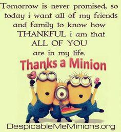 Thanks a Minion