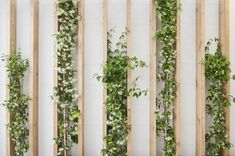 green wall / Rocha Apartment / CaSA