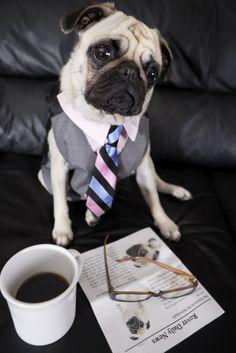 looking great... sir Pug~