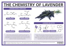 Compound Interest - Why Can Lavender Be Used to Repel Moths? – The Chemistry of Lavender