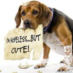 hopeless #petslife