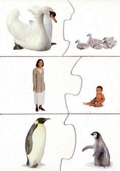 Dieren: Jong-ouder