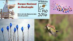 Se aproxima FIO 2016 la Féria Internacional de Ornitología que tendrá lugar como todos los años en el Parque Nacional de Monfragüe.