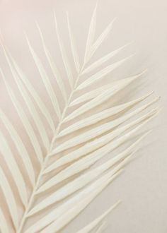 Cream Aesthetic, Brown Aesthetic, Aesthetic Colors, Aesthetic Images, Flower Aesthetic, Aesthetic Backgrounds, Aesthetic Iphone Wallpaper, Aesthetic Wallpapers, Aesthetic Style