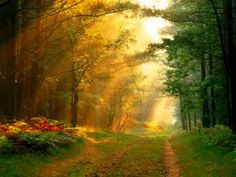 Beautiful nature pictures sun rays in german forest Forest Road, Tree Forest, Forest Light, Magical Forest, Black Forest, Beautiful Nature Pictures, Beautiful World, Trees Beautiful, Beautiful Forest
