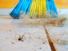 Effective Ways To Reduce Dust In Your Home – Springtime Cottage Borax Cleaning, Household Cleaning Tips, House Cleaning Tips, Cleaning Hacks, Cleaners Homemade, Diy Cleaners, Dusting Tips, Detox Your Home, Homemade Cleaning Supplies