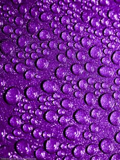 Purple: LOVE this color! Droplets make this photo POP! Purple Love, Purple Rain, All Things Purple, Purple Lilac, Shades Of Purple, Deep Purple, Red And Blue, Purple Stuff, Purple Shoes