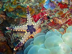Funky Starfish and Bubble Coral by David M Hogan, via Flickr