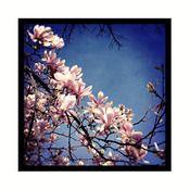 Magnolia greetings card