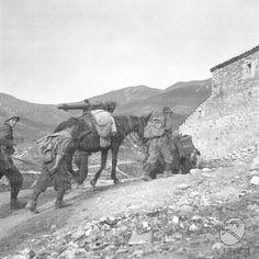 Alpini salgono verso una casupola con un mulo carico Albania War Horses, Italian Army, National History, Armed Forces, Warfare, World War Ii, Ww2, Warriors, Hunting
