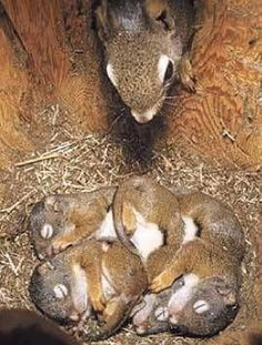 It& a nest check. All look fine and dandy! It& a nest check. All look fine and dandy! It& a nest check. All look fine and dandy! Cute Creatures, Beautiful Creatures, Animals Beautiful, Cute Baby Animals, Animals And Pets, Funny Animals, Cute Squirrel, Baby Squirrel, Squirrel Pictures