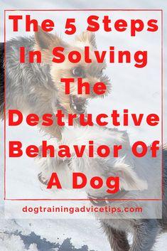 Puppy Day, New Puppy, Dog Hand Signals, Dog Steps, Basic Dog Training, Crate Training, Dog Eating, Dog Behavior, Dog Food