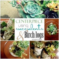 DIY Succulent Centerpiece using Birch Logs and Twine! {Sawdust and Embryos}
