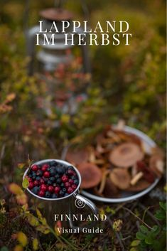 Visual Guide: Lappland im Herbst — EatThisWorld Lappland, Slow Travel, Plant Based Recipes, Sustainability, Highlights, Bucket, Plants, Food, Finland