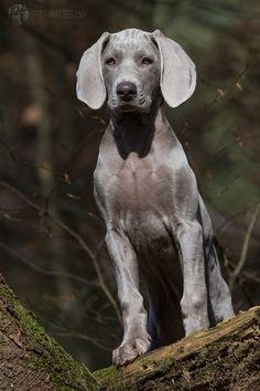 Hunde | Fotografie & Kunst Petra Tänzer