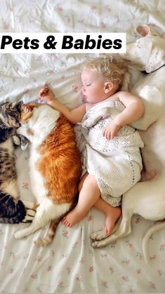 Baby Animals Super Cute, Cute Baby Dogs, Cute Little Animals, Baby Cats, Cute Cats And Dogs, Funny Cute Cats, Cute Funny Animals, Cute Kittens, Baby Animals Pictures