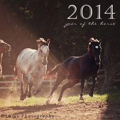 Happy 2014- Year of the Horse!