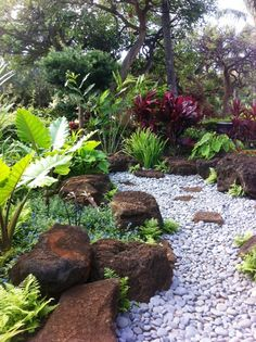 Sharon's Plants:  This landscape by Brian Cordero of Hawaii Landscape Management Group makes use of large moss rock and river rock to mimic a river bed. Ornam...
