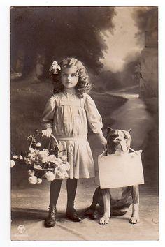 Vintage - English Bulldog