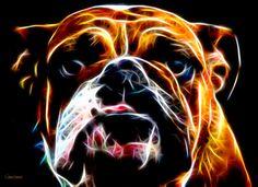 Bulldog Fractal - Akvis Neon