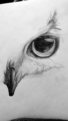 Eye Sketch Pencil Realistic 33 Ideas For can find Pencil sketching and more on our website.Eye Sketch Pencil Realistic 33 Ideas For 2019 Easy Doodles Drawings, Cool Art Drawings, Art Drawings Sketches, Beautiful Drawings, Owl Drawings, Sketches Of Eyes, Cute Owl Drawing, Heart Drawings, People Drawings