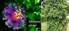 Byliny - Bylinky pro všechny Statues, Plants, Animals, Animales, Animaux, Effigy, Animal, Plant, Animais