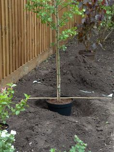 How to plant a tree right