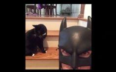 35 Best Batdad Images Batdad Vine Fun Things Bats
